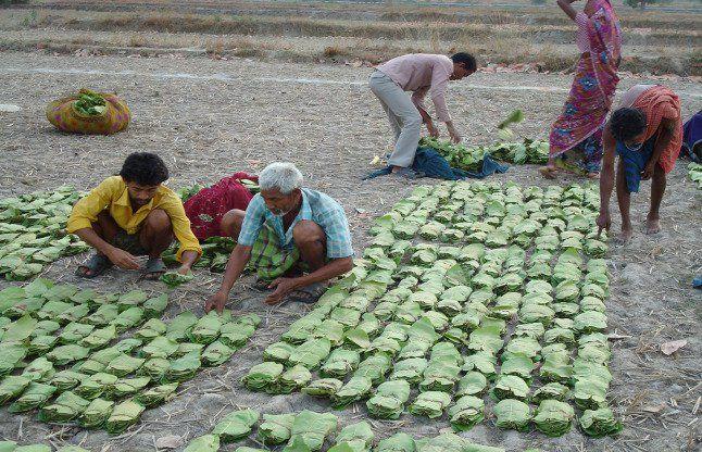 वन अधिकार पट्टाधारी किसानों से भी होगी समर्थन मूल्य पर धान की खरीदी