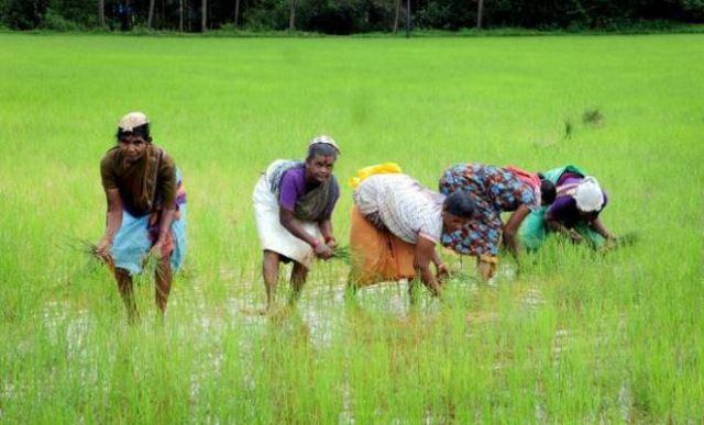 न्यूनतम समर्थन मूल्य पर धान खरीदने के लिए 41,084 किसानों को करीब 1,082 करोड़ रूपये का भुगतान