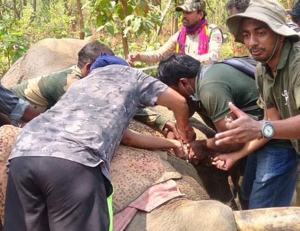 छत्तीसगढ़ का वन विभाग उत्पाती हाथियों को बिना बाहरी एक्सपर्ट के रेडियो कॉलरिंग में हासिल की सफलता