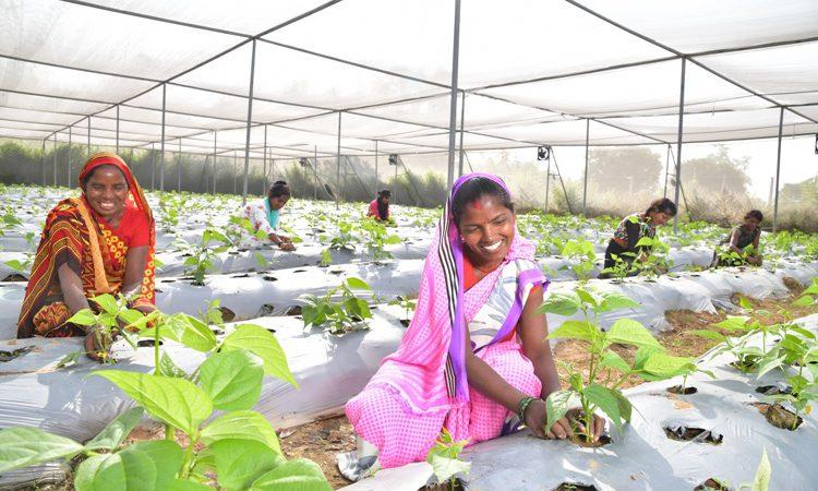 बालको गठित कृषक उन्नयन संगठन का टर्न ओवर पहुंचा 40 लाख रुपए